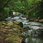 Organizacións ecoloxistas convidan a participar no próximo día mundial do medio ambiente en Vigo