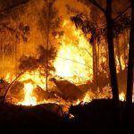 Esquerda Unida denuncia que a ausencia dun Plan contra o lume rigoroso pon en perigo a integridade do ecosistema de Galicia no rural