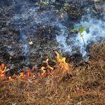 A Xunta lembra que a tramitación telemática das comunicacións de queimas de restos agrícolas é totalmente gratuíta a través da páxina web oficial