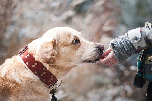 ¿Qué obligaciones tiene el dueño de un perro?