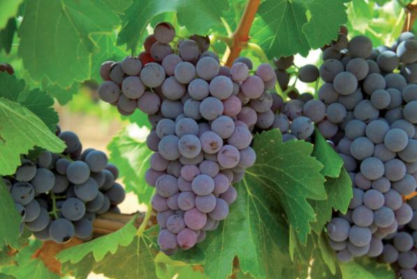 Vinosofos.com, tu base de datos de vinos completa