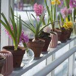 Donde comprar plantas ¿Tienda, vivero u online?