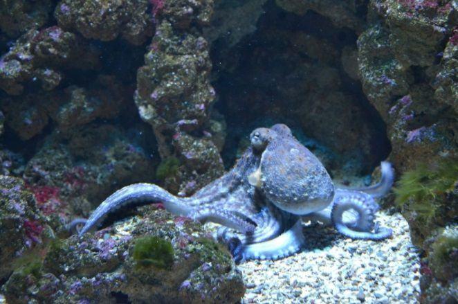 Vertebrados e invertebrados: Para los amantes de la vida animal