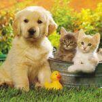 El propósito de las mascotas y su efecto en la humanidad