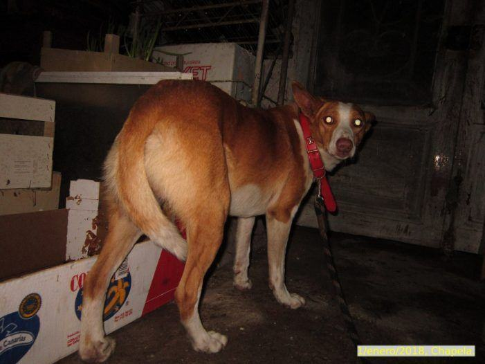 Visto en Facebook | Se busca al dueño/a de este perro