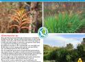 Atlas Sociedade Galega de Historia Natural de Flora Exótica Invasora: Chasmante spp
