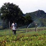 Un total de 466 mozos galegos reciben apoio de Medio Rural para incorporarse ao agro na convocatoria de 2017