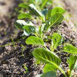 Medio Rural destina 450.000 euros ás axudas para nova participación de agricultores en réximes de calidade