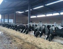 As industrias lácteas aumentan a presión sobre as granxas instándoas por burofax a asinar cláusulas de custes falsas