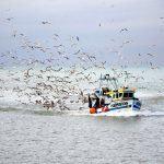 """ARVI pone en marcha el proyecto """"espantaves"""" para reducir las capturas incidentales de aves mariñas durante la pesca"""