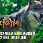 """PACMA anula la declaración de Salamanca como provincia """"libre de lobos"""""""