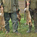 Varapalo judicial a los argumentos de la caza en Castilla y León