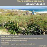 Voluntariado de ADEGA participará na eliminación de invasoras na Praia do Rostro (Fisterra)