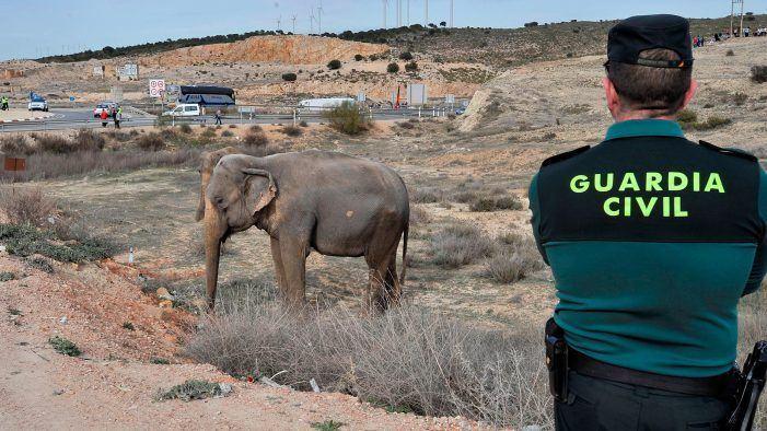 [INVESTIGACIÓN] La verdad sobre las elefantas del Gottani: muerte, maltrato y fuga