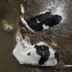 PACMA denuncia a quienes dejaron morir a los animales en la crecida del Ebro