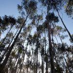 En Marea analizará e buscará alternativas ao Plan Forestal mediante unhas xornadas parlamentarias