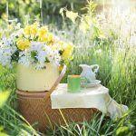 Café verde, una infusión natural de moda para la pérdida de peso