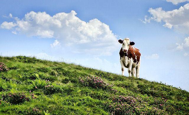 La leche cruda y la seguridad alimentaria