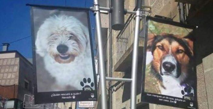 «Un animal non é un xoguete» así O Porriño fomenta a adopción de animais abandonados