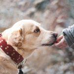 Qué actividades hacer con tu perro este otoño