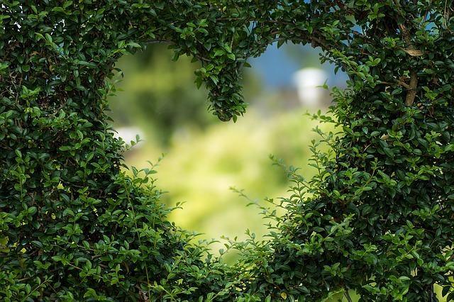 Quien la sigue la consigue; también en el amor