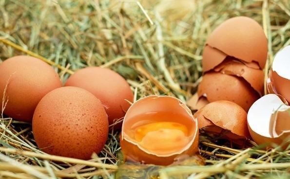 Qué son las proteínas de alta calidad