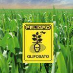 O proceso de autorización do glifosato está totalmente en entredito. Esiximos a súa retirada