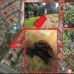 Alertan de procesionaria na zona do Museo Liste en Vigo