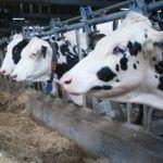 Os gandeiros e agricultores galegos xa poden solicitar as axudas da PAC