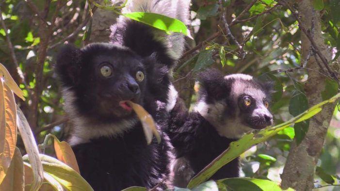 Divulgare viaxa a Madagascar para amosar un dos lugares máis diversos e singulares da Terra