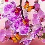 Orquídeas, todas sus características y cuidados
