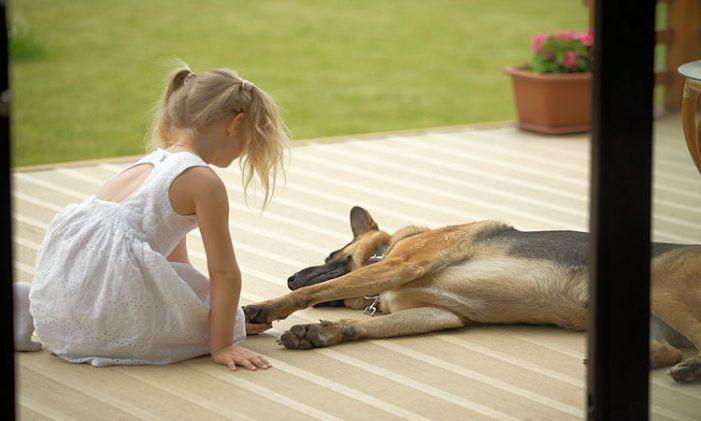 Ideas para mimar a las mascotas y disfrutar de la naturaleza