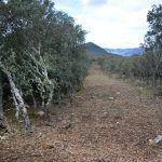 Uns traballos forestais ameazan a Serra de Enciña da Lastra