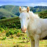 Piden á Xunta unha Lei específica para defender aos cabalos na provincia