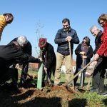 A Cidade da Cultura comeza a plantación de árbores do Bosque do Camiño con colectivos vencellados ás rutas xacobeas