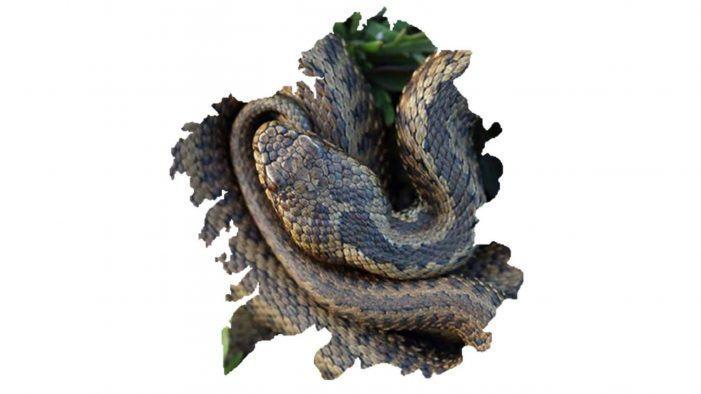 Xa podedes descargarvos de balde a actualización do Atlas dos anfibios e réptiles de Galicia