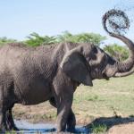 Las fascinantes curiosidades del reino animal