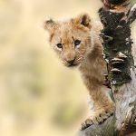 Algunas curiosidades sorprendentes sobre animales que debías conocer