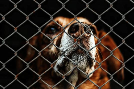 La importancia de rescatar mascotas de un refugio