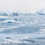 ¿Puede el calentamiento global dejarnos sin peces?