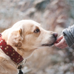 Una buena alimentación, clave para la calidad de vida de tu perro