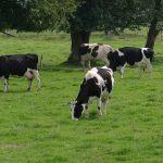 Convocada a terceira edición dos premios Exceleite ás mellores explotacións de vacún de leite de Galicia