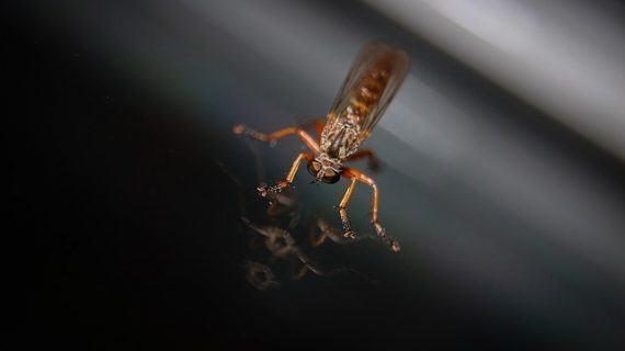 Ventajas de instalar mosquiteras en verano