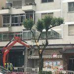 Outro arboricidio en Vigo, desta feita a traizón