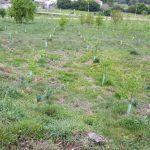 España lidera el desarrollo de las directrices comunes de la Unión Europea para las actuaciones de reforestación establecidas en la Estrategia de Biodiversidad para 2030