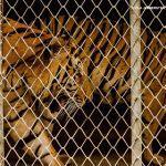 WWF reclama medidas contundentes ante CITES para frear o tráfico de especies