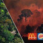 A carne McDonald's, Burger King e KFC destrúe a Amazonia