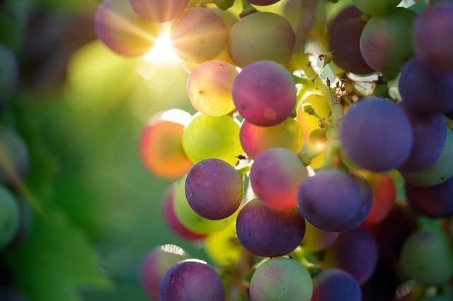 ¿Cómo elegir un buen vino de Navarra?