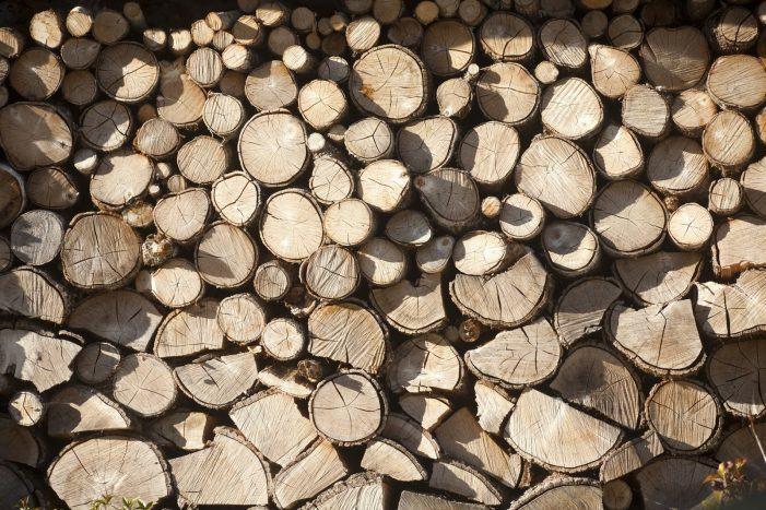 Dende mañá poderán presentarse só por vía electrónica as solicitudes para os alleamentos de madeira nos montes xestionados pola Xunta