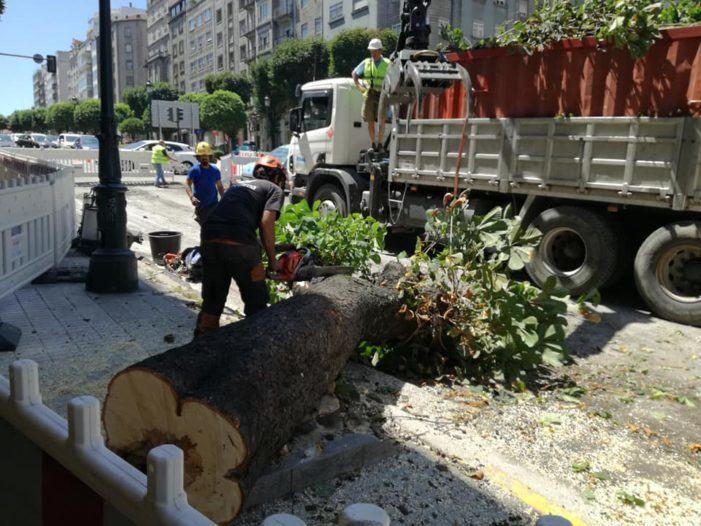 Marea de Vigo pedirá a creación dun Plan Director do Arboredo para cidade de Vigo no vindeiro Pleno